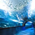 el-aquarium-san-sebastian