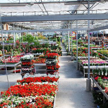 Endanea Garden: jardinería y botánica en Hondarribia